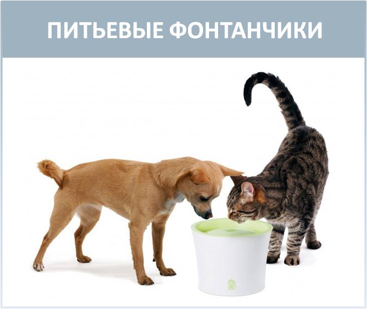 Поилка для кошки и собаки