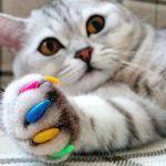 Накладные мягкие коготки для кошек MIKKO
