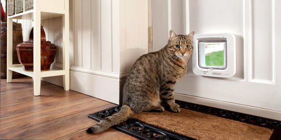 Дверца для кошки в двери