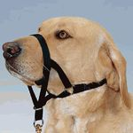 Недоуздок (халти) для собак Ttrixie