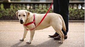 Корректирующая шлейка PetSafe Easy Walk Harness размер L