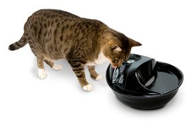 Керамическая автопоилка для кошек и собак Pioneer Pet Rain Drop черная