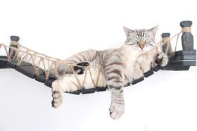 Игровой настенный комплек для кошек Лаундж ModernCat мост