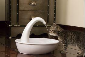 Питьевой фонтанчик Pioneer Pet Swan