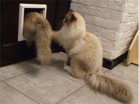 Установленная дверца для кошки