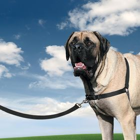Корректирующая шлейка PetSafe Easy Walk Harness размер XL