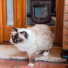 Дверца для кошки Ferplast Swing MicroChip с замком