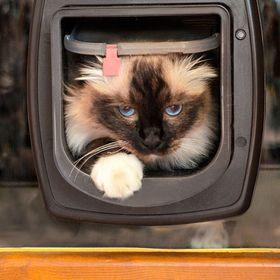 Дверца для кошек Ferplast Swing MicroChip установленная