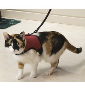 Шлейка мягкая с поводком для кошек Trixie 41896