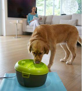 Поилка для собак DogH2O